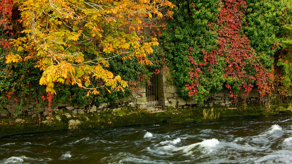 Galway featuring fall colors and a river or creek
