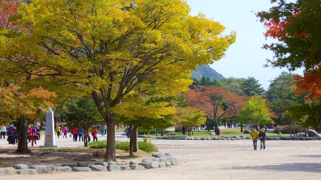 Parque Nacional Seorak-san mostrando un parque o plaza, escenas urbanas y hojas de otoño