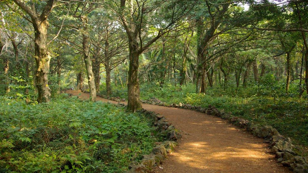 Isla de Jeju mostrando vistas de paisajes, bosques y un parque