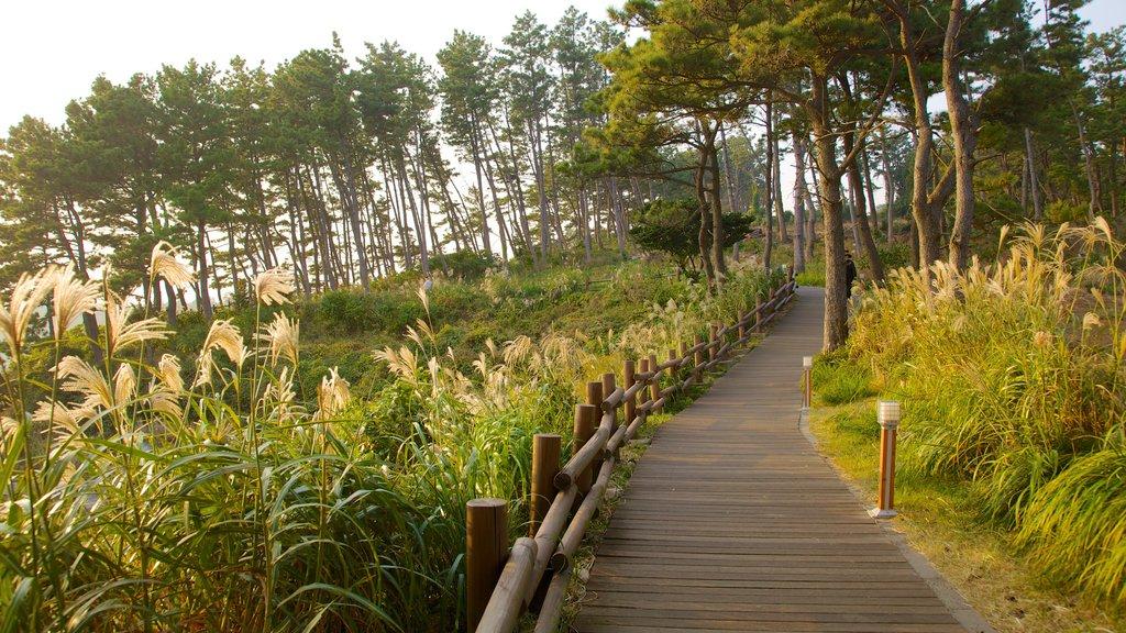 Isla de Jeju ofreciendo vistas de paisajes, un parque y escenas forestales