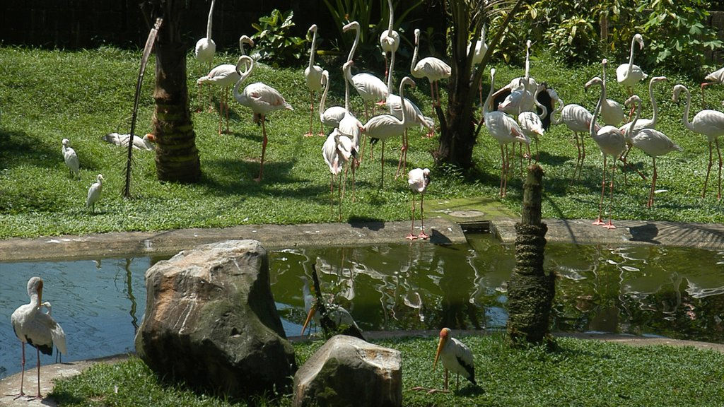 Lake Gardens showing tranquil scenes, a park and zoo animals