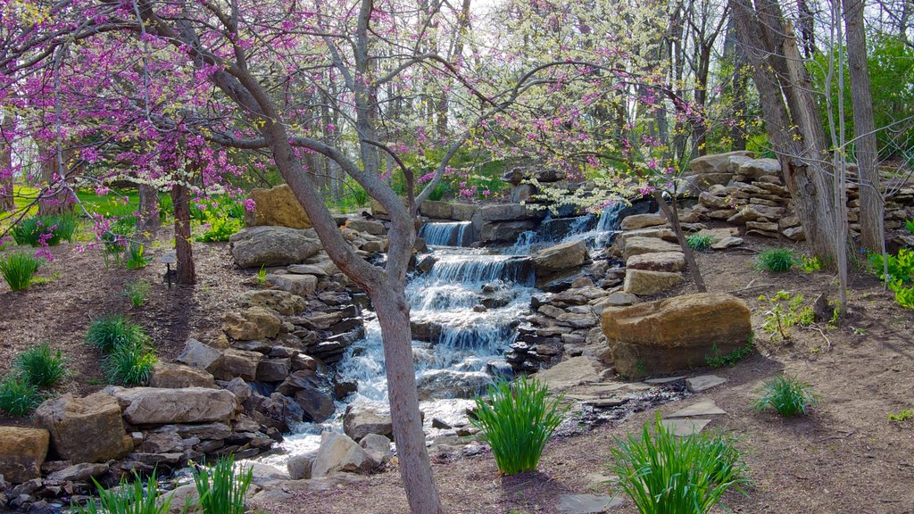 Overland Park Arboretum and Botanical Gardens showing a river or creek, a waterfall and forest scenes