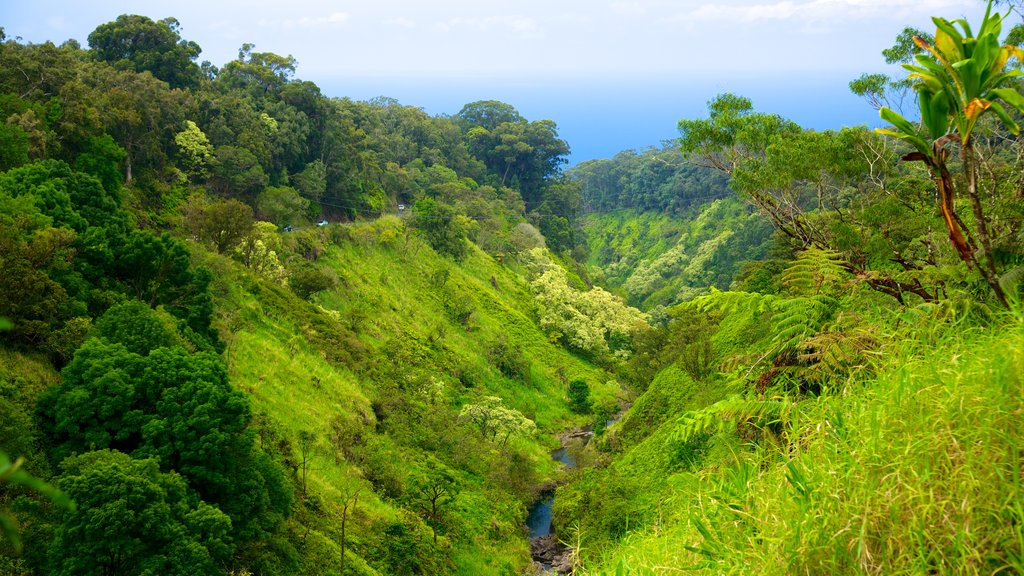 Maui Island which includes forests and landscape views