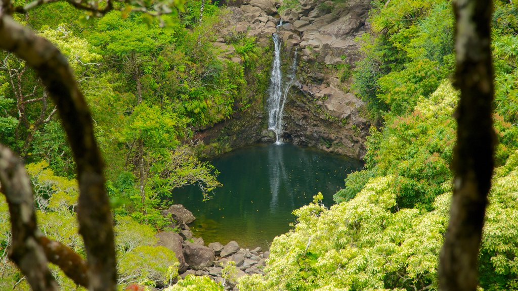 Maui Island showing a cascade, forest scenes and a garden