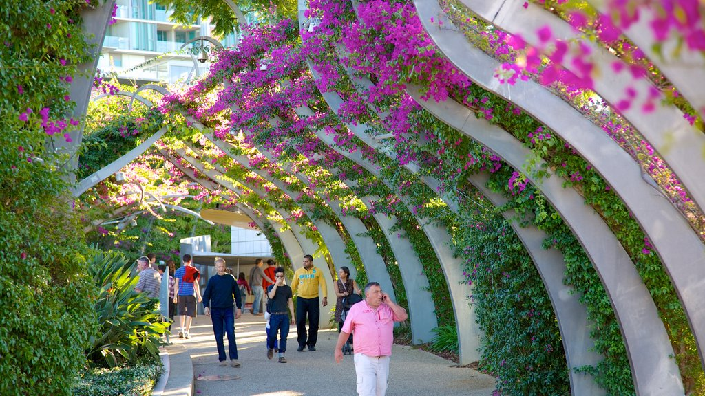 Southbank Parklands featuring street scenes, a city and flowers