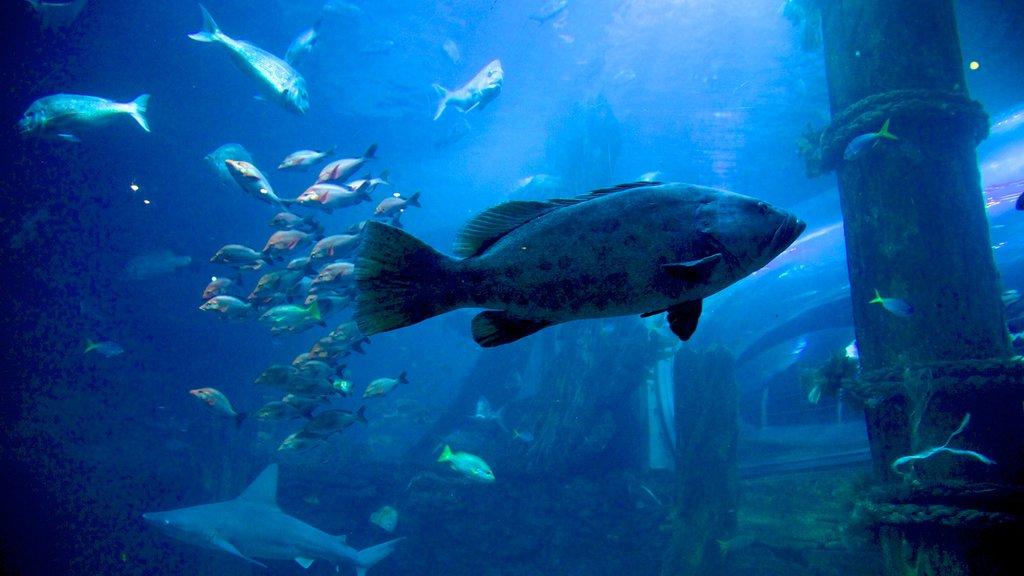 Melbourne Aquarium que incluye vida marina y vistas interiores