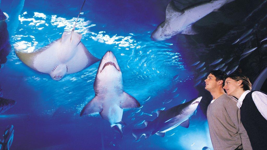 Melbourne Aquarium que incluye vida marina y vistas interiores y también una pareja