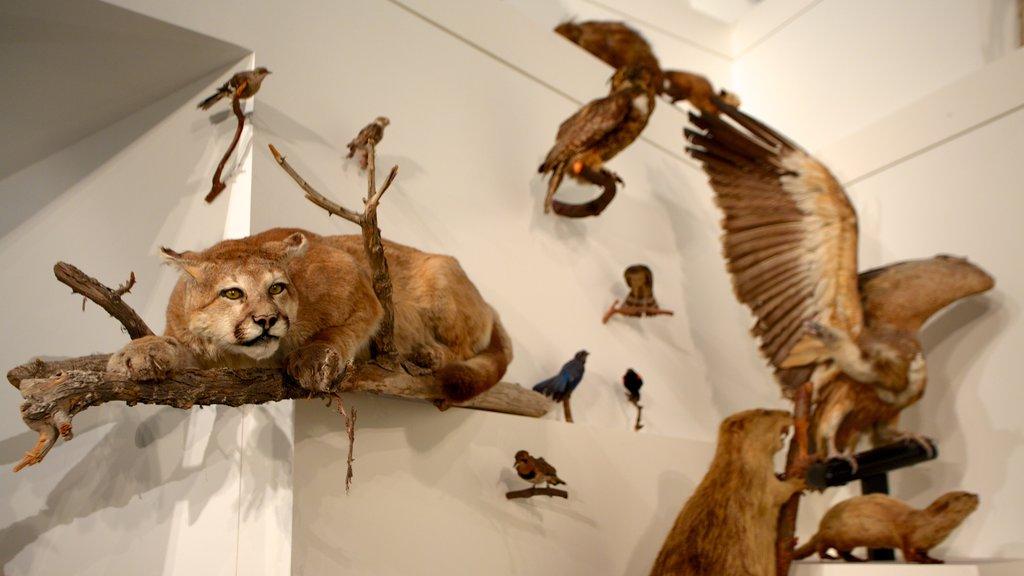 Museo de Melbourne mostrando vistas interiores