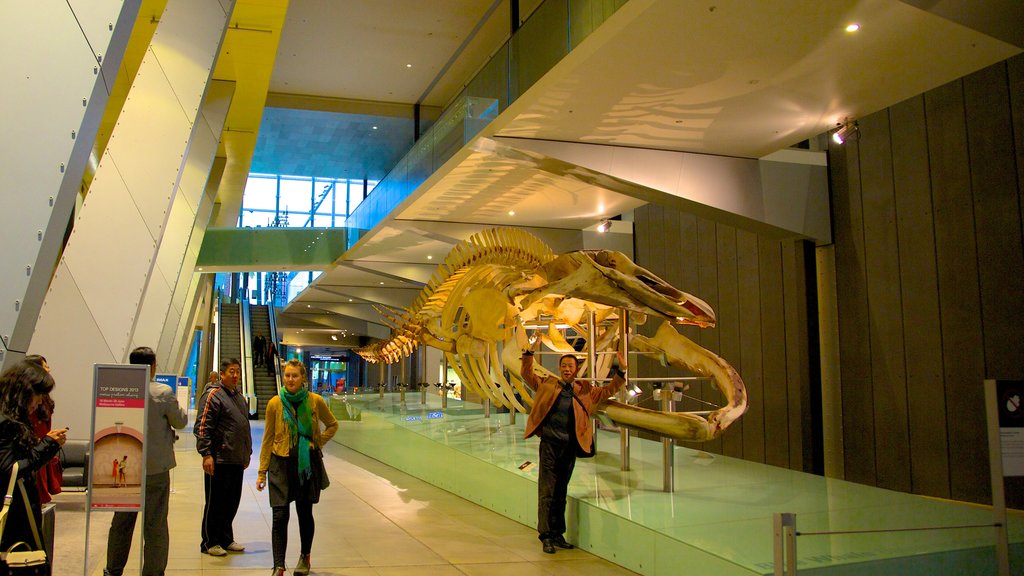 Melbourne Museum which includes interior views