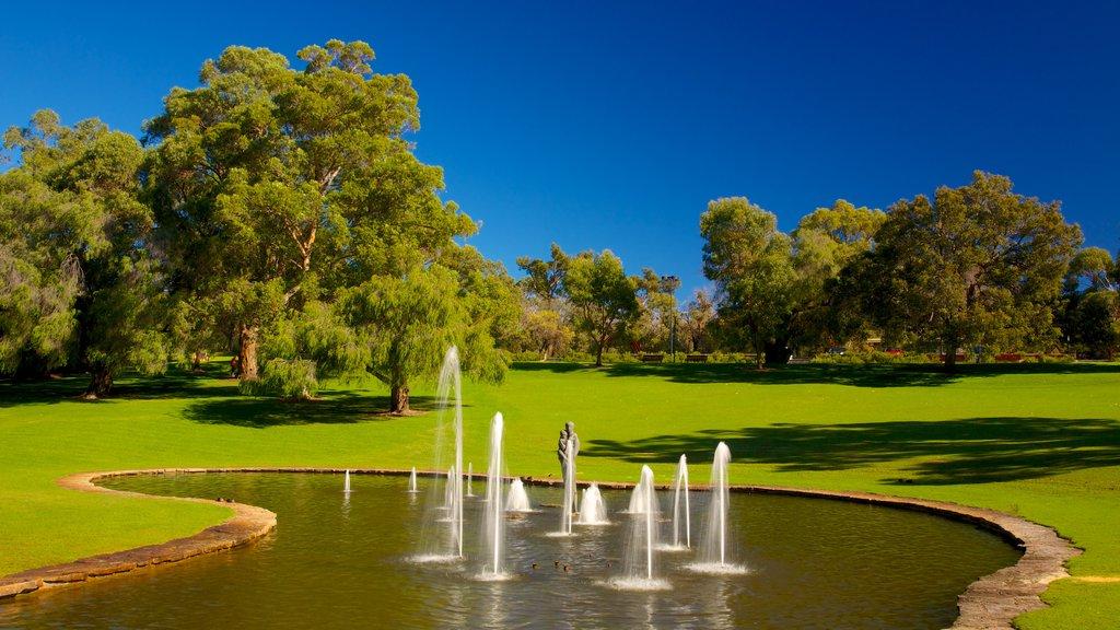 Kings Park and Botanic Garden mostrando un jardín y una fuente