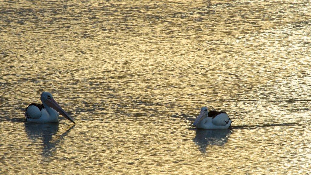 Laguna Esplanade ofreciendo vida de las aves