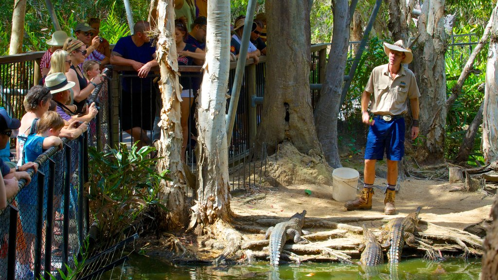 Hartley\'s Crocodile Adventures showing rides, zoo animals and dangerous animals