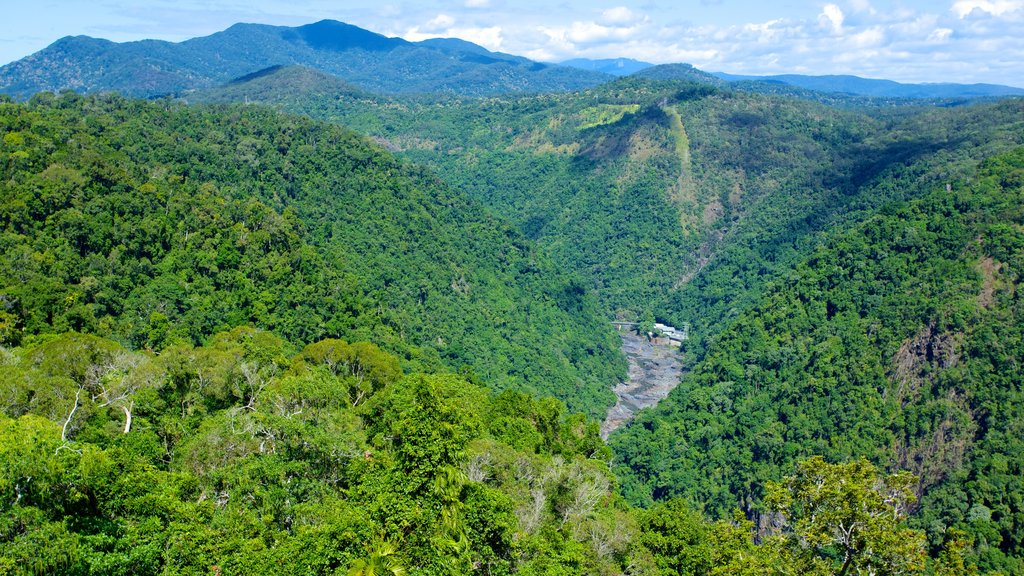 Skyrail Rainforest Cableway which includes landscape views, mountains and rainforest
