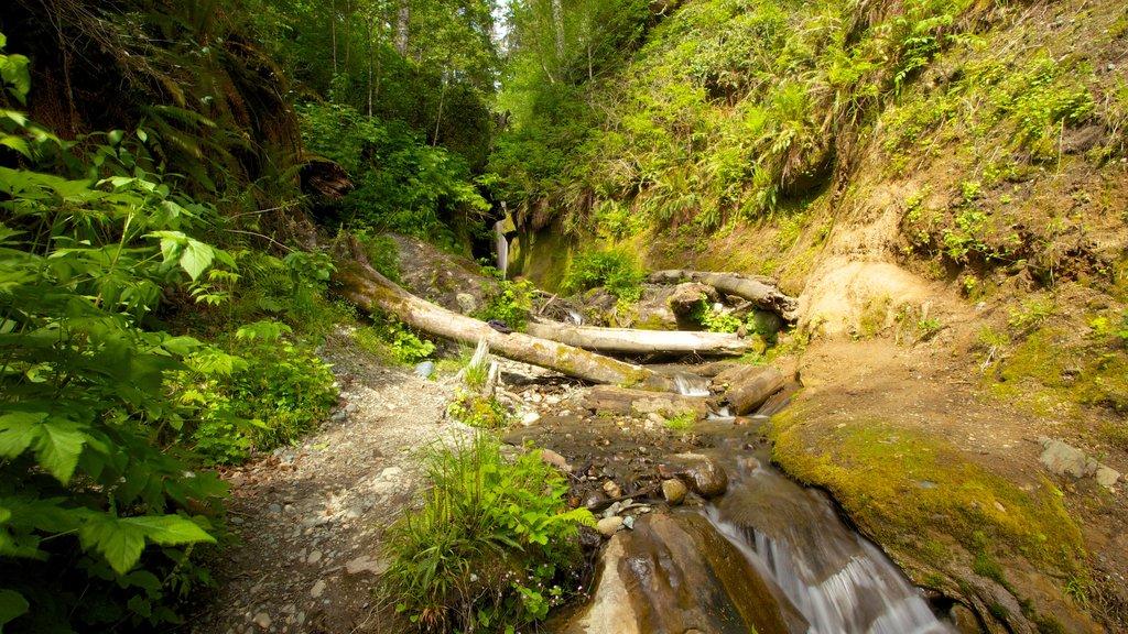 Victoria que incluye un jardín, bosques y un barranco o cañón