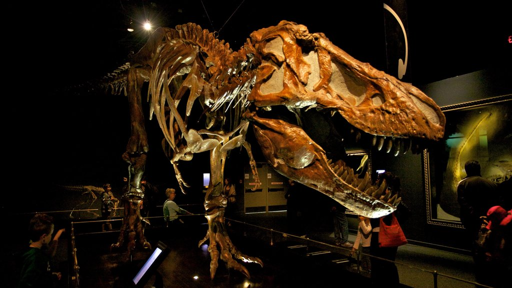 Royal Tyrrell Museum featuring interior views