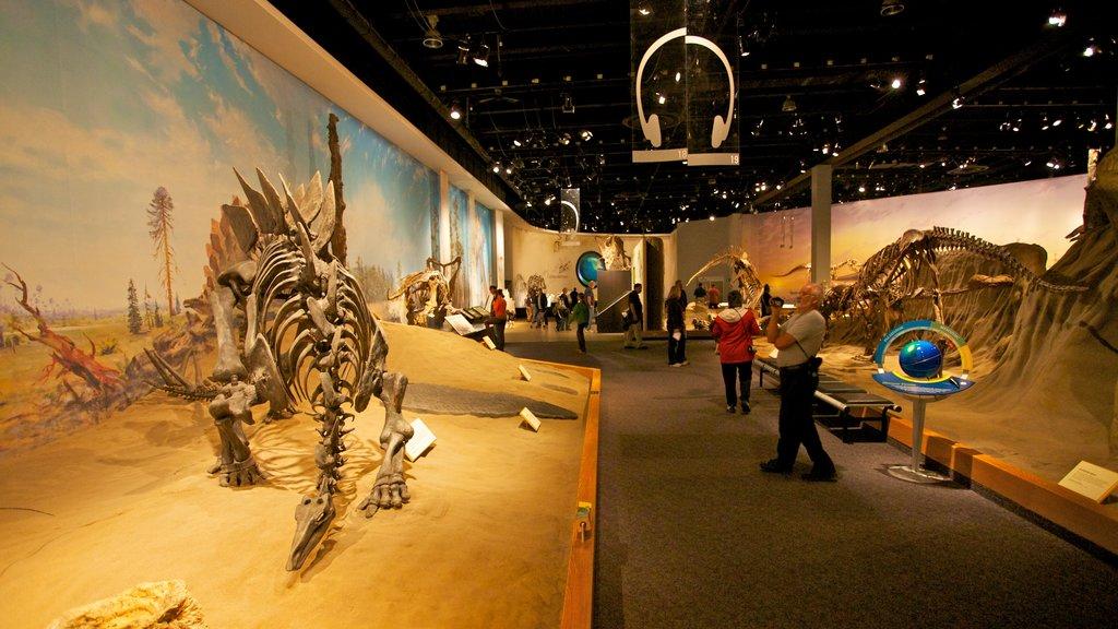 Royal Tyrrell Museum featuring interior views