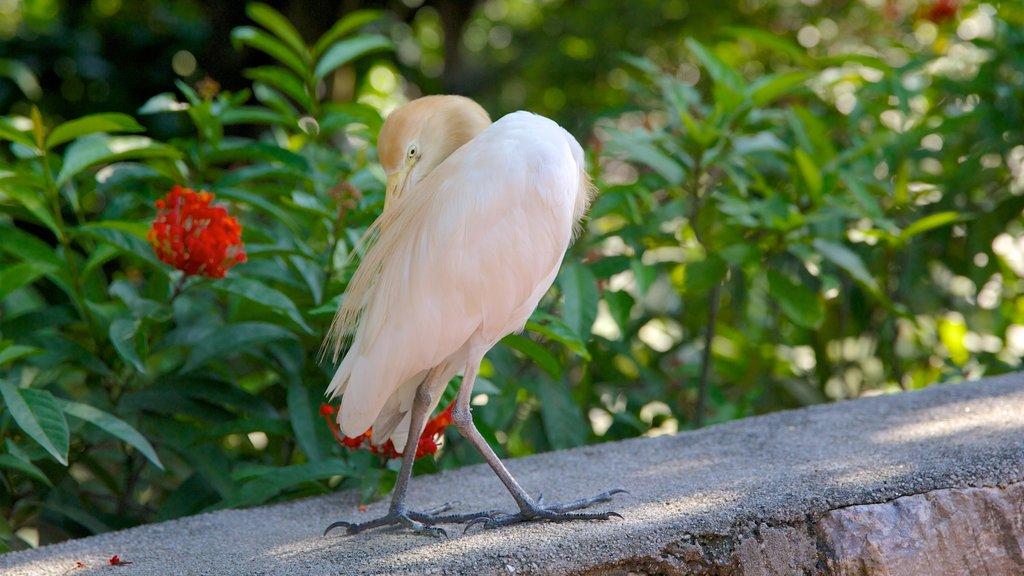 Kuala Lumpur Bird Park featuring bird life and zoo animals