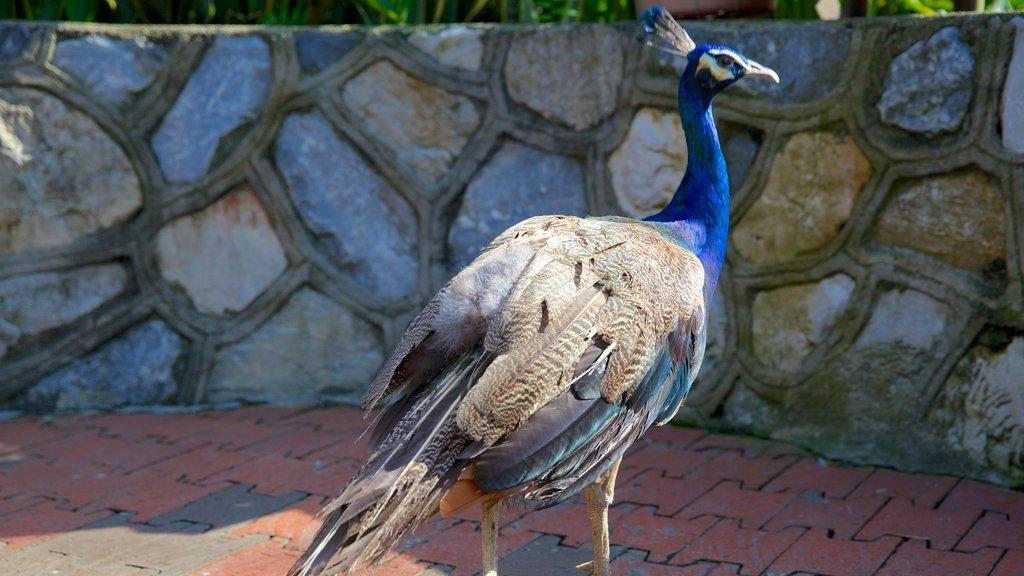 Kuala Lumpur Bird Park featuring zoo animals and bird life