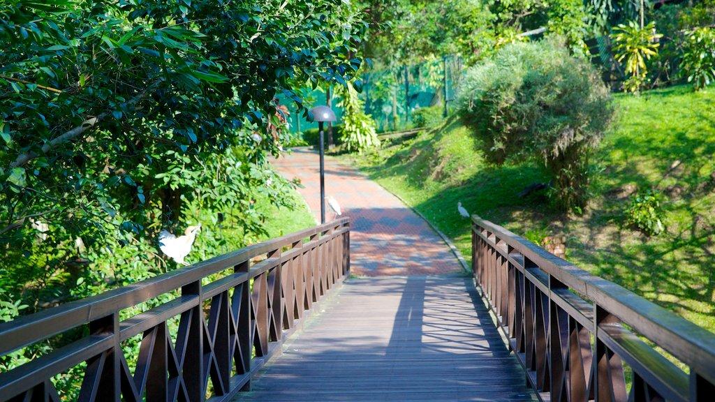 Kuala Lumpur Bird Park showing a bridge, a garden and zoo animals