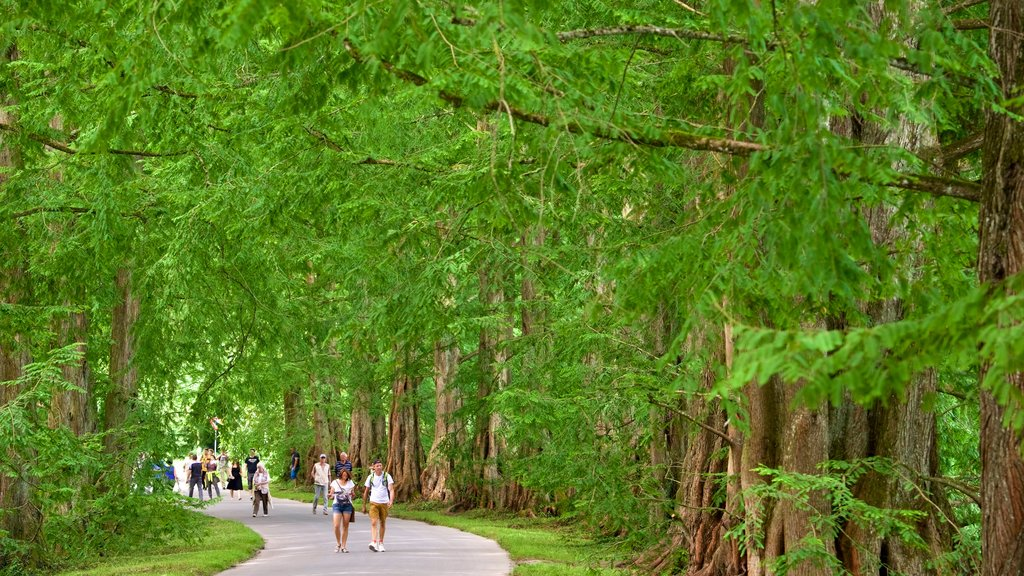 Mainau Island which includes a park as well as a couple