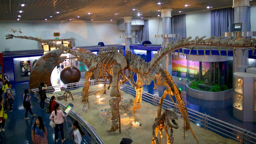 Museo de Historia Natural que incluye vistas interiores
