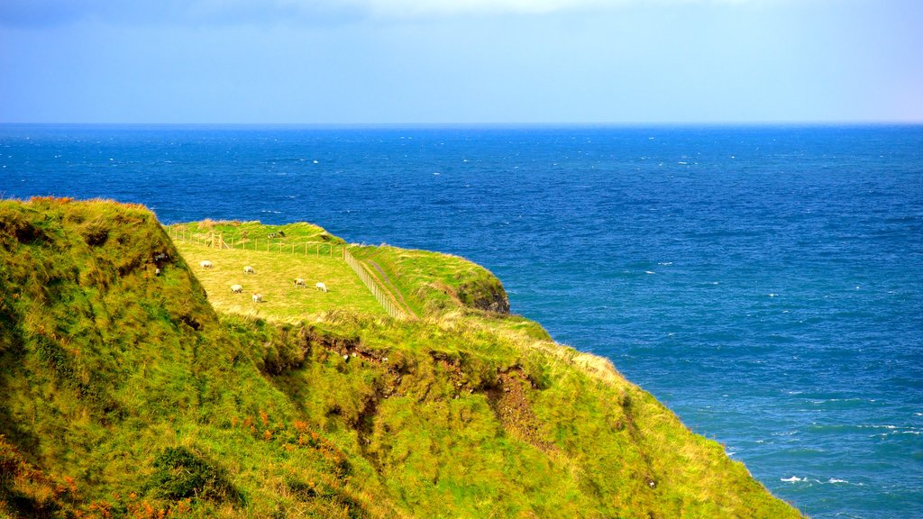 Giant\'s Causeway which includes tranquil scenes and general coastal views