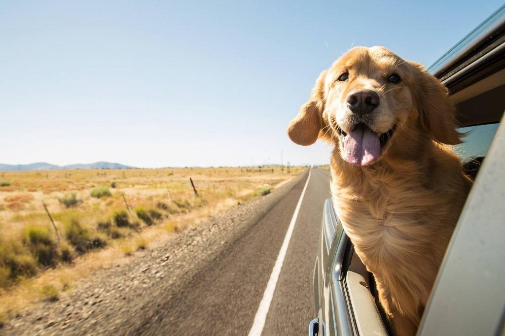 voyage animal de compagnie