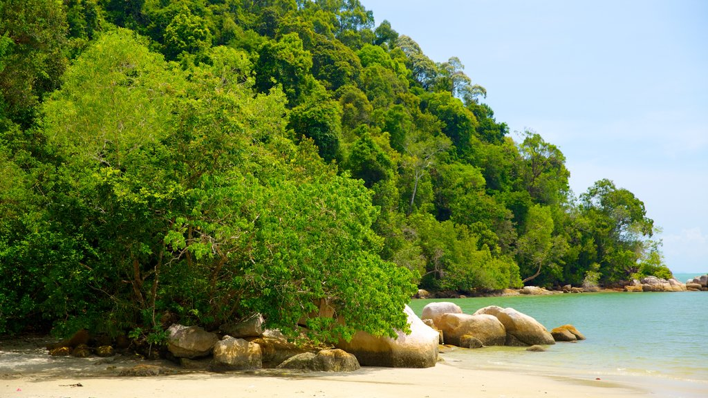 Penang National Park which includes a sandy beach, rugged coastline and forest scenes