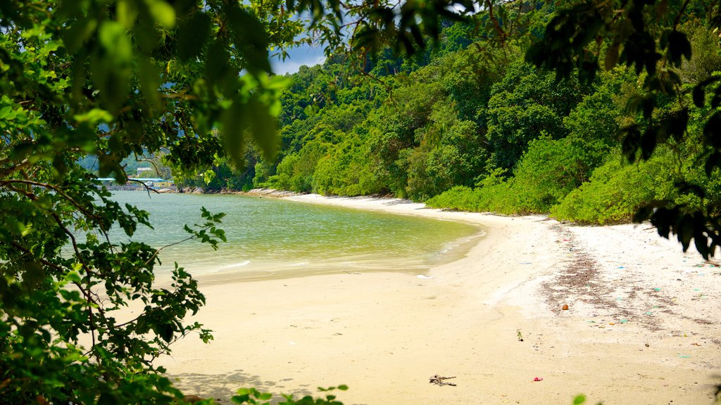 Penang National Park which includes a beach and forest scenes