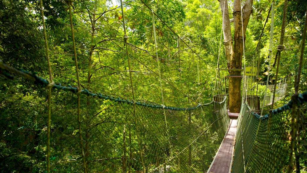 Penang National Park showing forest scenes and a suspension bridge or treetop walkway