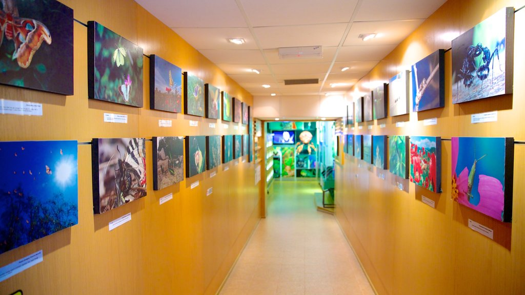 Butterfly Farm showing art, interior views and zoo animals