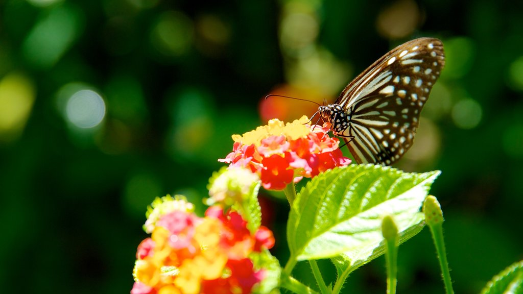 Butterfly Farm featuring animals, zoo animals and flowers