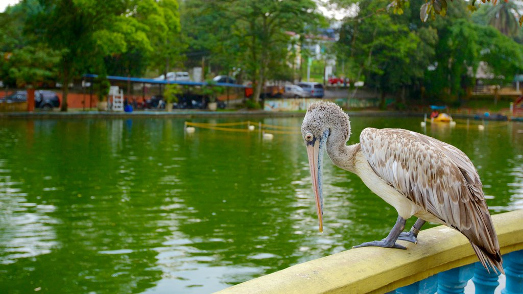 Johor Bahru showing bird life, a pond and zoo animals