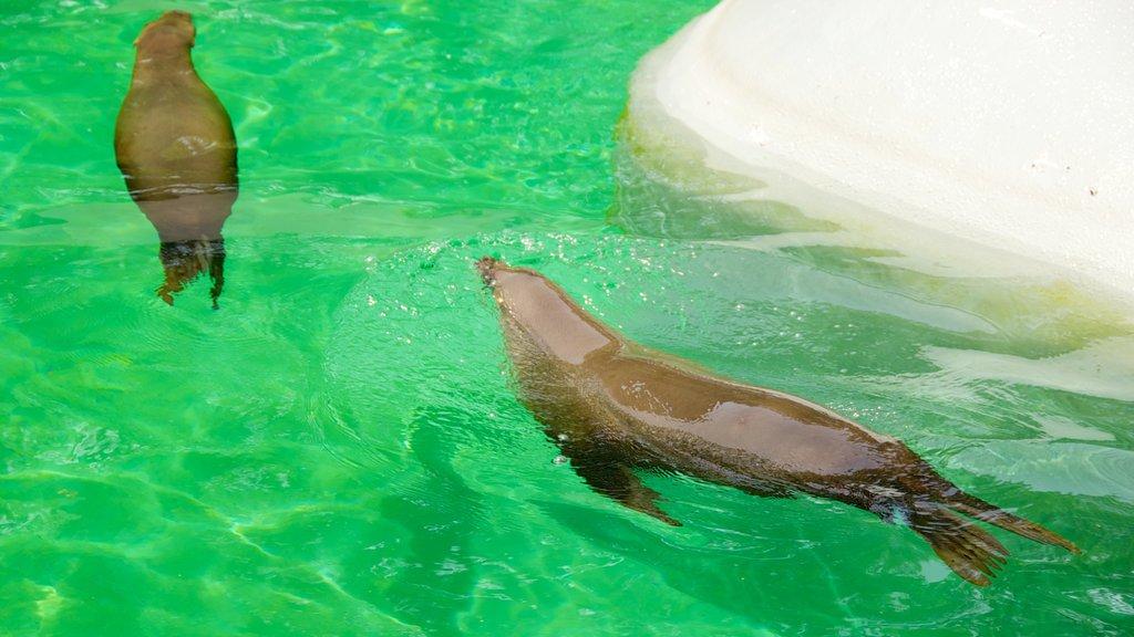 Kansas City Zoo featuring marine life, zoo animals and a pool