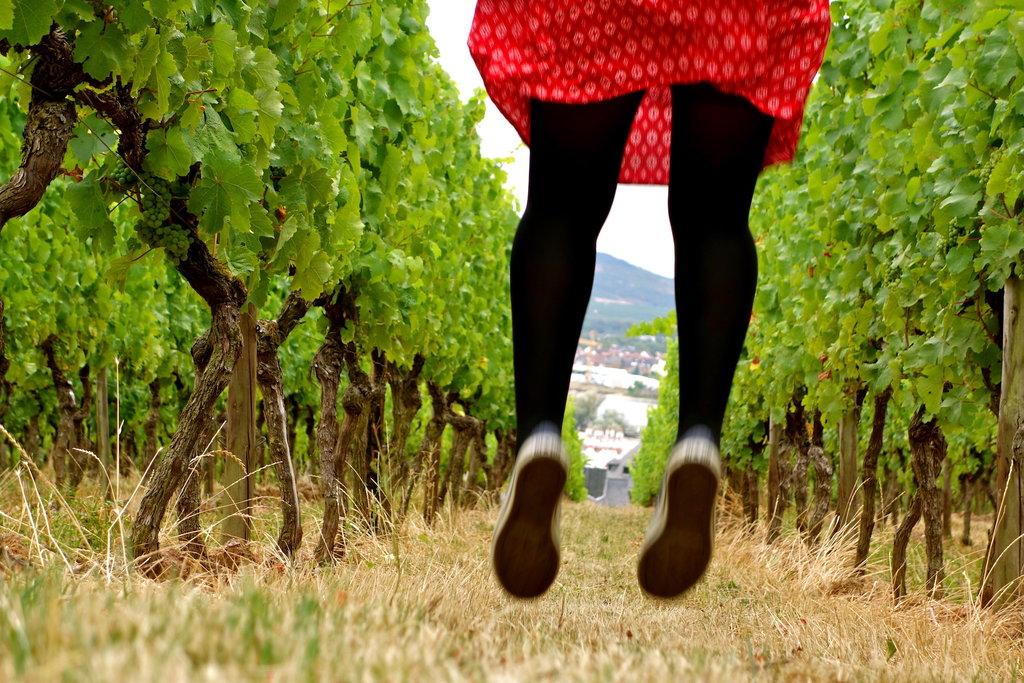 sauter dans les vignes