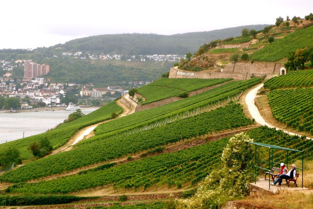 vignobles Rüdesheim