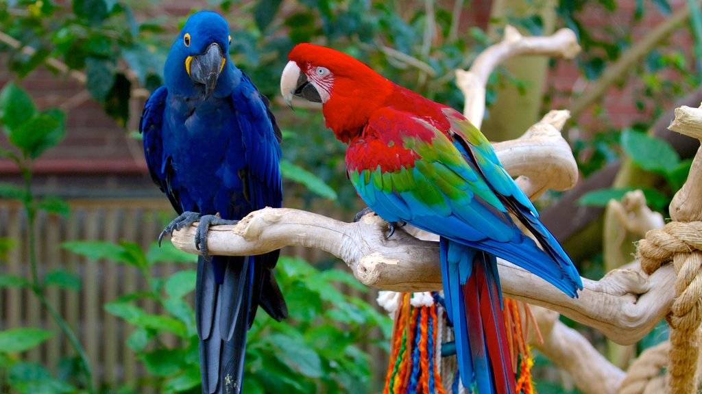National Aviary showing bird life and zoo animals
