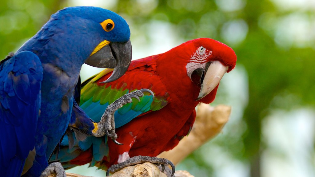 National Aviary featuring zoo animals and bird life