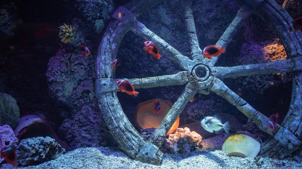 Sea Life Jesolo featuring marine life