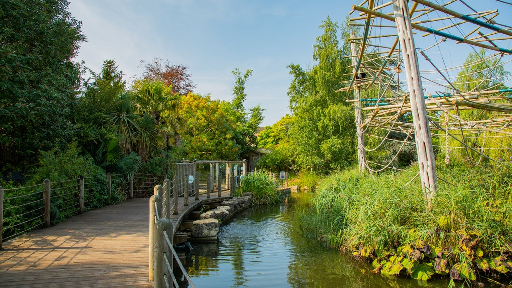 Bristol Zoo which includes a pond and a bridge