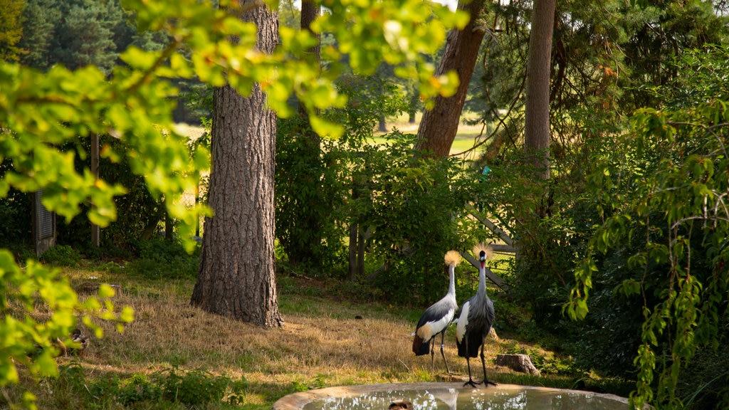 Harewood House ofreciendo vida de las aves y un parque