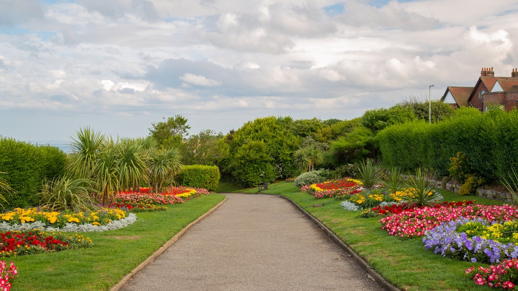 Scarborough featuring flowers and a garden