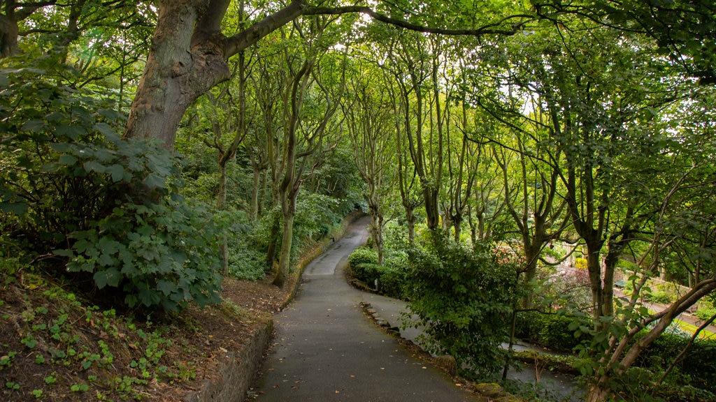 South Cliff Italian Gardens which includes a garden