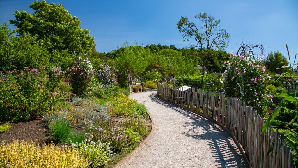 Harlow Carr Botanical Gardens featuring wildflowers and a garden