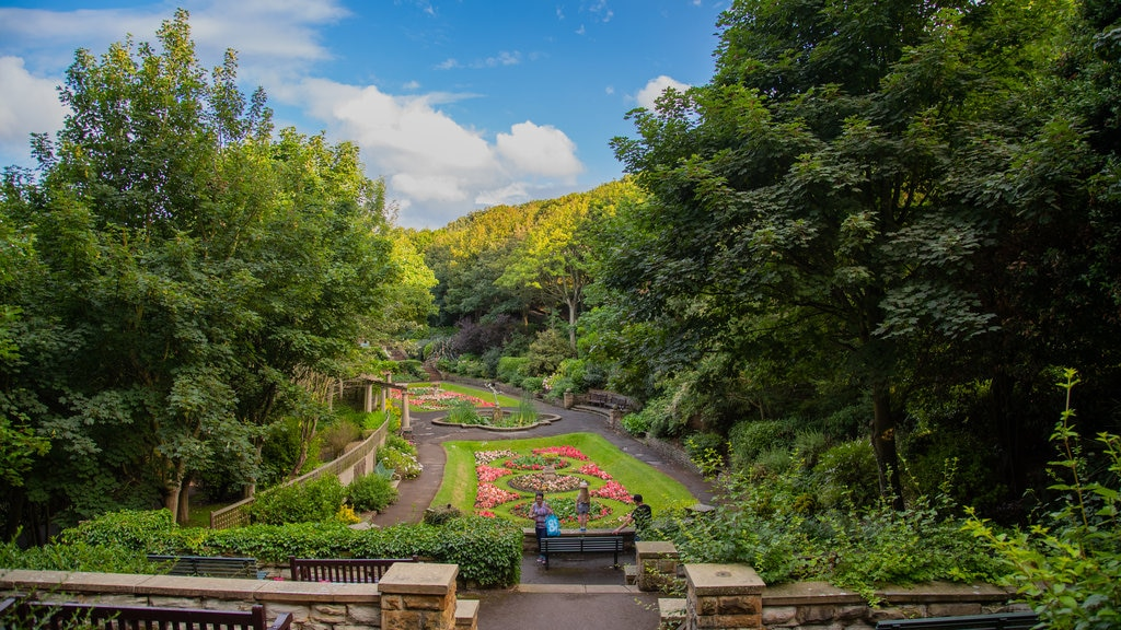 South Cliff Italian Gardens showing a park and flowers