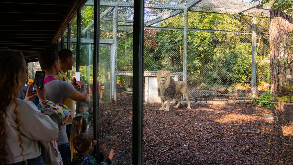 Bristol Zoo showing land animals, zoo animals and dangerous animals