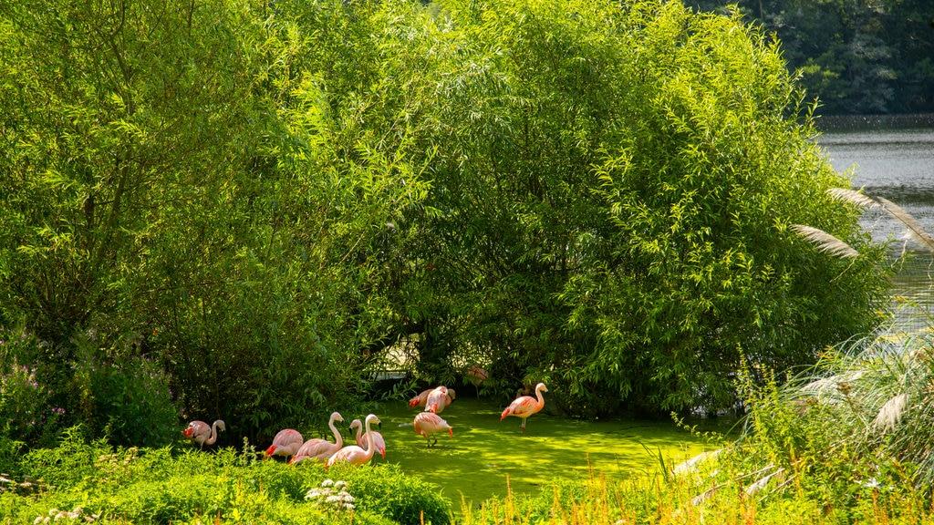 Harewood House mostrando vida de las aves y un jardín