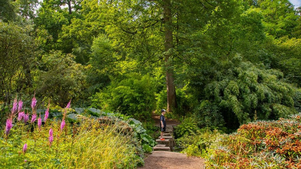 Harewood House que incluye escenas forestales, flores silvestres y un jardín