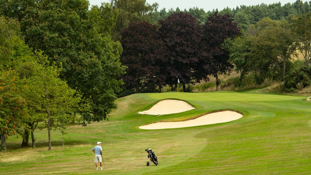 Pannal Golf Club showing golf as well as an individual male