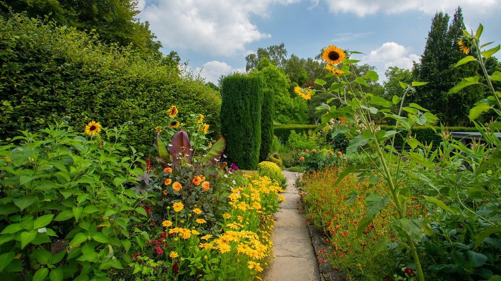 Jardín York Gate que incluye flores, un parque y flores silvestres